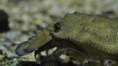 documentary : A crab crawling on the ground - underwater shot