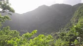 quill : Tropical forest in a volcano crater at Quill National Park Sint Eustatius Caribbean