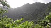 krater : Tropical forest in a volcano crater at Quill National Park Sint Eustatius Caribbean
