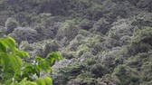 quill : Tropical forest in a former volcano crater at Quill National Park Sint Eustatius Caribbean