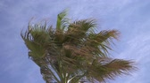 podsvícení : Branches of a palm tree moving in the wind in slow motion