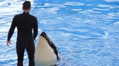 baleia : Trainer feeds orca with fish