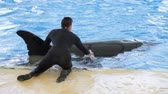 baleia : Trainer strokes orca during show Stock Footage