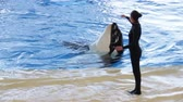 baleia : Orca dancing with trainer during killer whale show