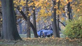 полиция : Police on horses in autumn park Стоковые видеозаписи
