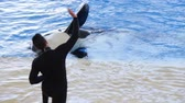 baleia : Orca does tricks during  killer whale show