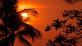 гавайский : Palm trees silhouettes on tropical beach at vivid sunset time. Exotic trees and big orange sun. Travel, Tourism, vacation concept background. Paradise Island scene, beautiful evening sky landscape. Стоковые видеозаписи