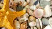 naufrágio : Large Yellow Seastar and close up lots of different mixed colorful seashells as background. Various corals, marine mollusk and scallop shells. Sea vacation travel and beach holiday tourism concept.