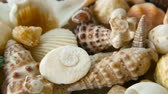 vieira : Close up lots of different mixed colorful seashells as background. Various corals, marine mollusk and scallop shells. Sea vacation travel and beach holiday tourism concept. Vídeos