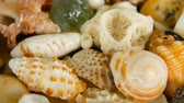 denizyıldızı : Close up lots of different mixed colorful seashells as background. Various corals, marine mollusk and scallop shells. Sea vacation travel and beach holiday tourism concept. Stok Video