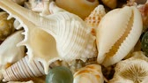 naufrágio : Close up lots of different mixed colorful seashells as background. Various corals, marine mollusk and scallop shells. Sea vacation travel and beach holiday tourism concept. Stock Footage