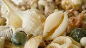 scallops : Close up lots of different mixed colorful seashells as background. Various corals, marine mollusk and scallop shells. Sea vacation travel and beach holiday tourism concept. Stock Footage