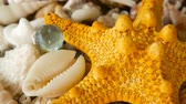 vieira : Large Yellow Seastar and close up lots of different mixed colorful seashells as background. Various corals, marine mollusk and scallop shells. Sea vacation travel and beach holiday tourism concept.