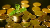 банкротство : Management efficiency. Golden coins stack and green leaf on black background. Time for Success of Finance Business. Investment, business financial ideas concept. Unfocused rotating penny
