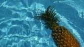 hidratar : Pineapple Floating In blue Water In Swimming Pool. Healthy Raw Organic Food. Juicy Fruit. Vegetarian, Vegan Nutrition, Vitamins, Diet, summer holidays, vacation concepts. Exotic tropical background Vídeos