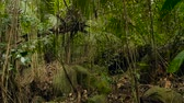 liána : Wild, vivid vegetation of deep misty tropical forest. Jungle landscape. Interior of exotic asia woods. Mossy lianas dangling from the rainforest canopy. Green natural background of subtropical forest.