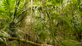 zkroucený : Wild, vivid vegetation of deep misty tropical forest. Jungle landscape. Interior of exotic asia woods. Mossy lianas dangling from the rainforest canopy. Green natural background of subtropical forest.