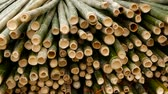 chop sticks : Round cross sliced bamboo trunk bundles in stack prepared for use as a building construction material in asia. Natural texture. Pile of cutted trees. Deforestation concept. decor and furniture source.