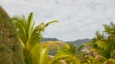 tereprendezés : Unusual exotic trees, green coconut palms on tropical Koh Phangan island. Malibu Beach landscape. Idyllic sunny day on Chaloklum bay. Popular travel destination. Vacation concept