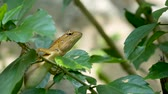ještěrka : A small exotic bloodsucker lizard sits in the middle of lush green foliage, jungle in tropics, natural background with reptiles. extraordinary unusual Life in the forest, cold-blooded animal.