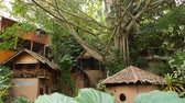 Lovely huts near tropical tree. Wonderful shacks of small village located around amazing tropical tree on sunny day in jungle. Green life. exotic thailand village. living in nature.