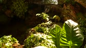Tropical plants and cascade in beautiful garden. Various green tropical plants growing near small cascade with fresh water on sunny day in amazing garden 무비클립