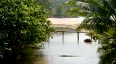 River between tropical forest near seashore. River between exotic trees near sand beach of sea in sunny day