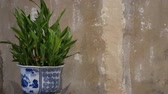 weathered : Potted plant near grungy wall. Ornamental Chinese ceramic pot with green plant placed near shabby concrete wall