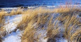 linha do horizonte : Dune scene with beach grass and snow along a Baltic Sea beach Riga