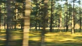linha do horizonte : blurred car trip in sunny autumn forest road
