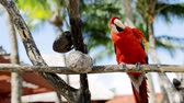 живая природа : nature and wild birds concept - close up of red parrot sitting on perch