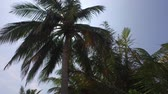 leaf : travel, tourism, vacation, nature and summer holidays concept - palm trees and sun rays in sky Stock Footage