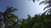 coroa : travel, tourism, vacation, nature and summer holidays concept - palm trees and sun rays in sky Stock Footage