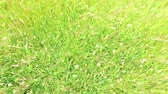 Уайлдфлауэр : clover and grass growing on meadow or field 48