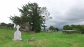 prato : old celtic cemetery graveyard in ireland 62