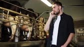 industry : man calling on cellphone and cows background at dairy farm Stock Footage
