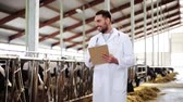 stodola : veterinarian with cows in cowshed on dairy farm