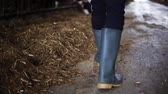 agricultura : man in gumboots walking along cowshed on farm Stock Footage