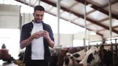 stodola : man texting on smartphone and cows at dairy farm