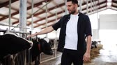 stodola : man or farmer with cows in cowshed on dairy farm