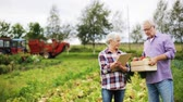 rolnik : senior couple with box of vegetables on farm