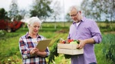 olericulture : senior couple with box of vegetables on farm