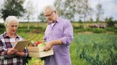 orgânico : senior couple with box of vegetables on farm