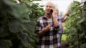 огурцы : old woman calling on smartphone in farm greenhouse