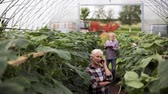 olericulture : old woman calling on smartphone in farm greenhouse