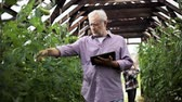 rolnik : old man with tablet pc in greenhouse on farm