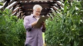 olericulture : old man with clipboard in greenhouse on farm