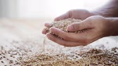 celý : male farmers hands holding malt or cereal grains