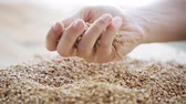 industry : male farmers hand pouring malt or cereal grains