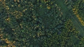 flora : aerial view to green summer forest and power line